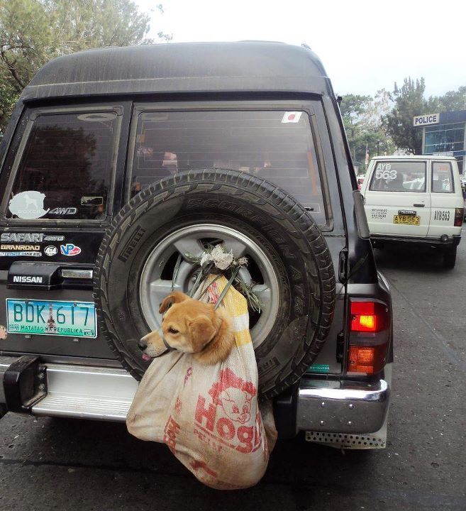 Philippines Dog on back of SUV