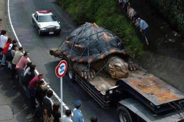 Movie prop tortoise on truck