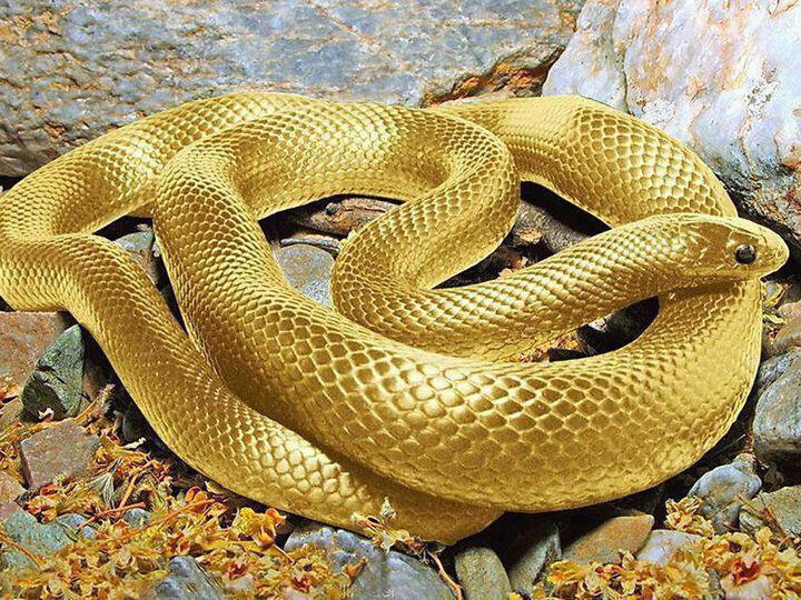 Altered photo of golden snake