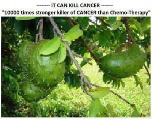 Is Graviola a Cure for Cancer?