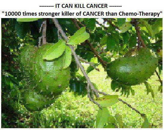 Graviola fruit kills cancer graphic