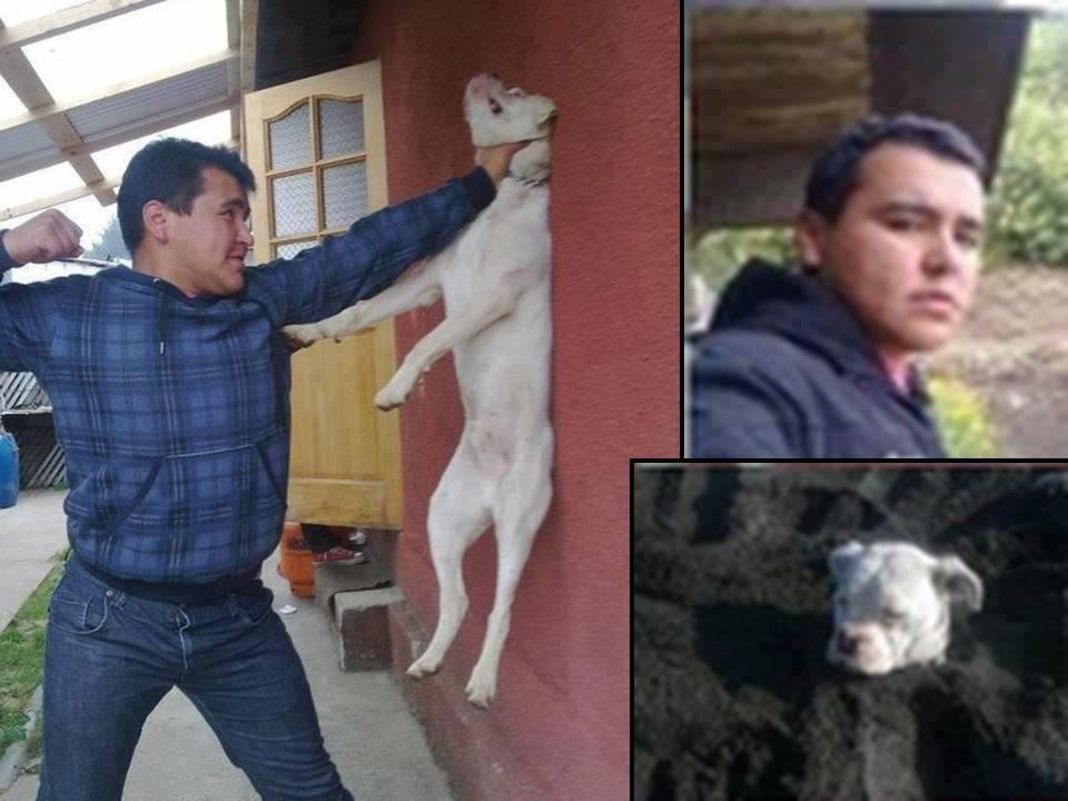 Man punching dog