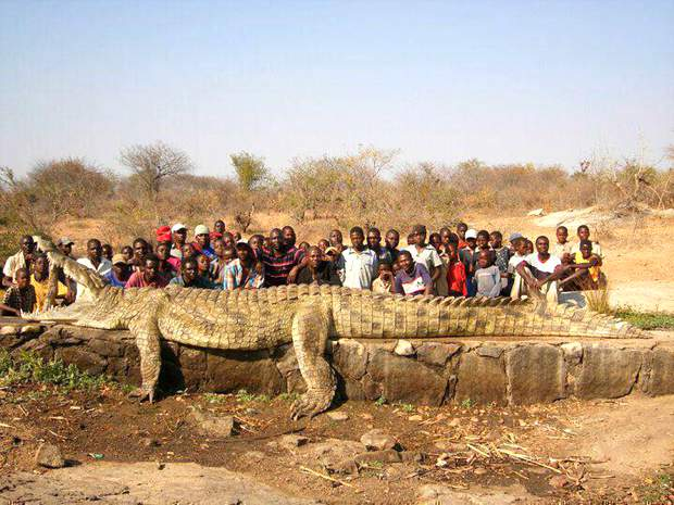 large-crocodile