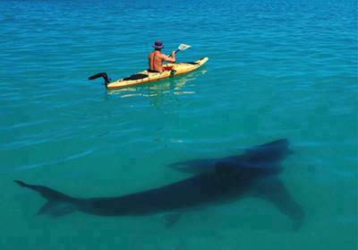 Fake photo of large shark swimming under kayak