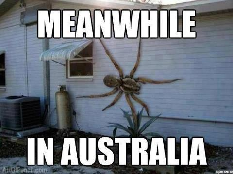 Giant scary spiders memes - photo#20