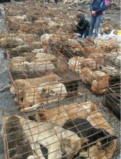 Dogs crammed into cages in China