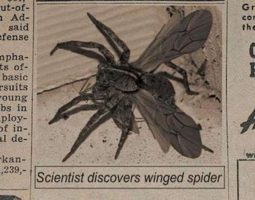Fake newpaper article about a winged spider