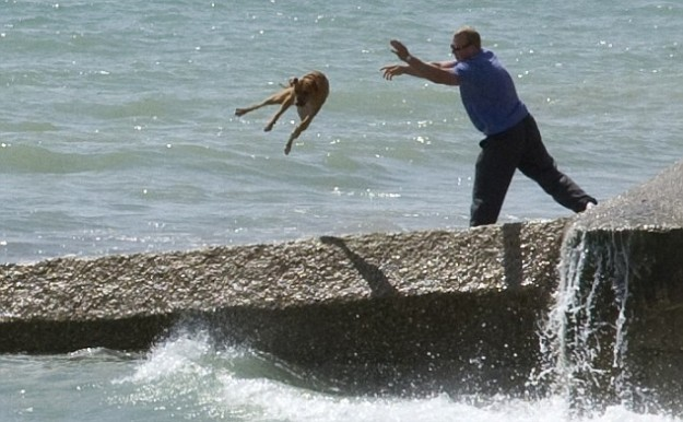 Man throwing dog in ocean