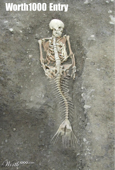 Real Mermaid Skeletons