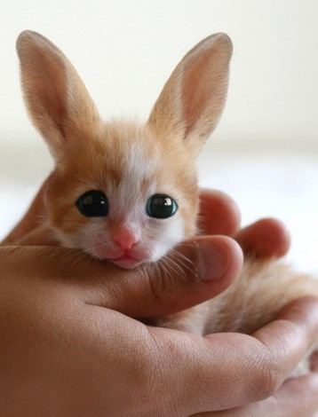 Fennec Hare