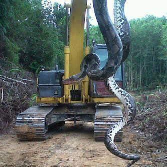 Classic Viral Photo: Giant Snake - wafflesatnoon com