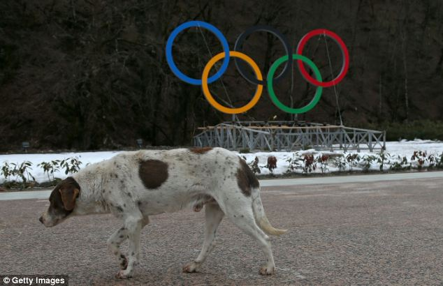 Dog Near Olympic Rings