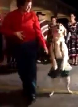 Merengue Dancing Dog