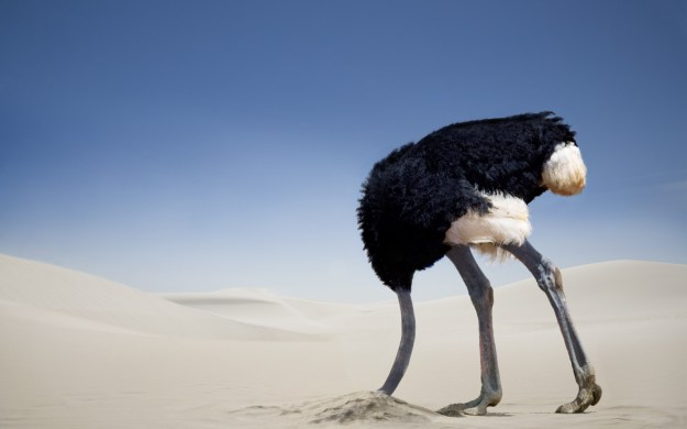 Image result for ostrich with head in sand