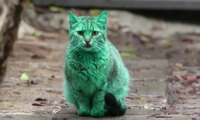 green cat of bulgaria