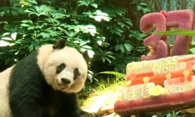 oldest panda jia jia