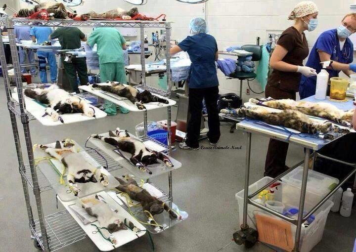 Cats being spayed and neutered