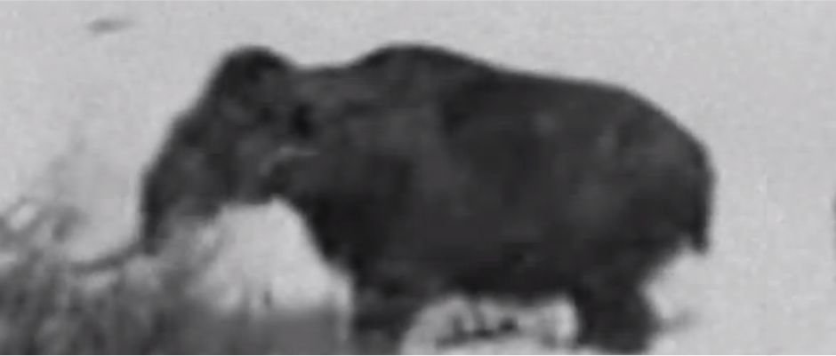 Woolly Mammoth Film from 1943: Real or Hoax?